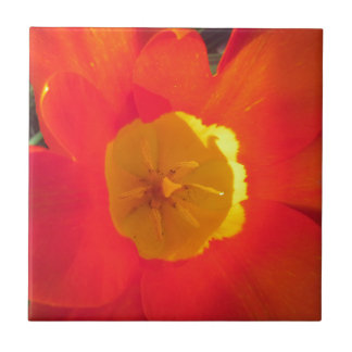 Red and yellow open tulip flower tile