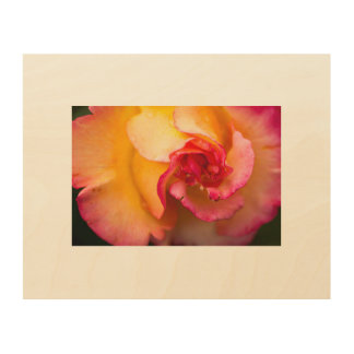 Red and yellow rose flower wood wall art