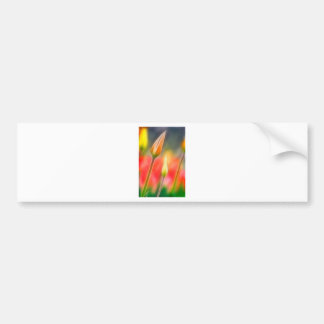 Red and Yellow Tulip Sketch Bumper Sticker