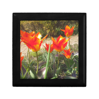 Red and Yellow Tulips Gift Box