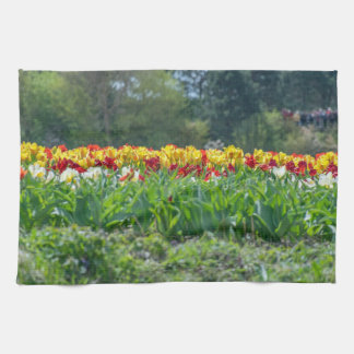 Red and yellow tulips in a field kitchen towel