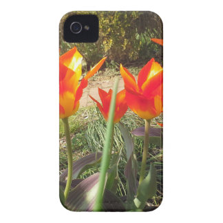 Red and Yellow Tulips iPhone 4 Case-Mate Case