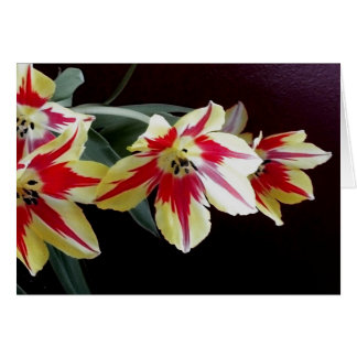 Red and Yellow Tulips Note Card