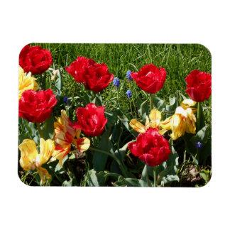 Red And Yellow Tulips Rectangular Photo Magnet