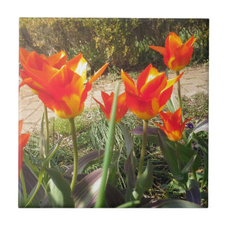 Red and Yellow Tulips Tile