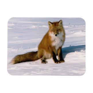Red Arctic Winter Fox Refrigerator Flexible Magnet