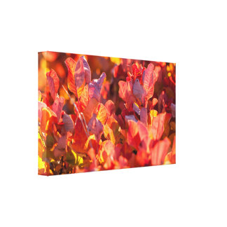 Red autumn nature canvas print