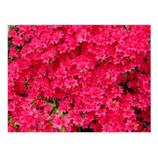 Red Azalea Flower Patch Postcard