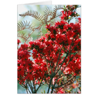 Red Azaleas and meaning Card