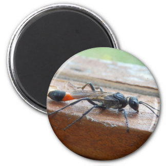 Red Banded Sand Wasp Magnet