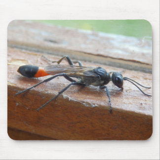 Red Banded Sand Wasp Mouse Mat