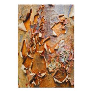 Red Bark Photo Print