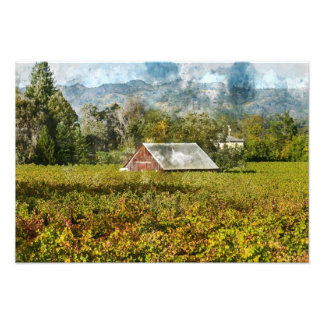 Red Barn in a Vineyard Photo Print