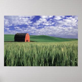 Red barn in wheat & barley field in Whitman Poster