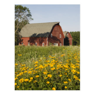 Red Barn with Yellow Wildflowers Postcard