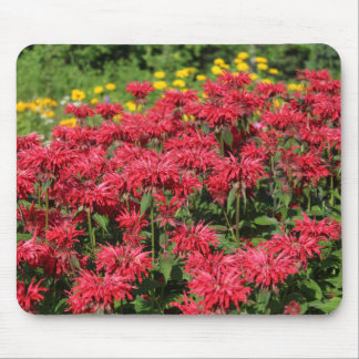 Red Bee Balm False Sunflower Mouse Pad