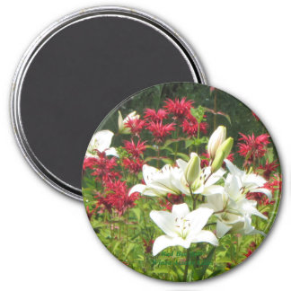 Red Bee Balm White Asiatic Lilies Magnet