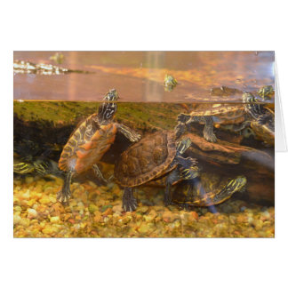 Red Bellied Turtle (Alabama) Card