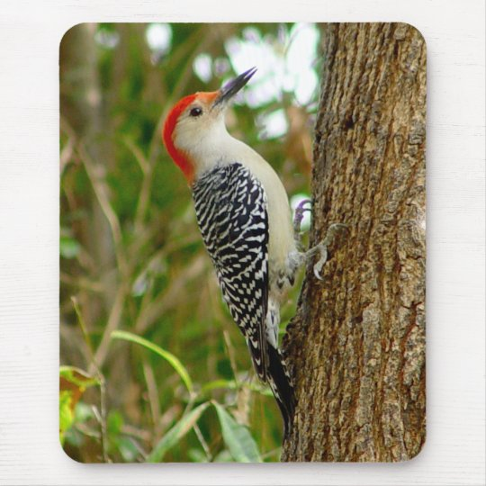 Red bellied Woodpecker Bird Mousepad