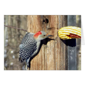 Red Bellied Woodpecker Card