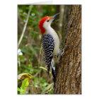 Red Bellied Woodpecker Card 3