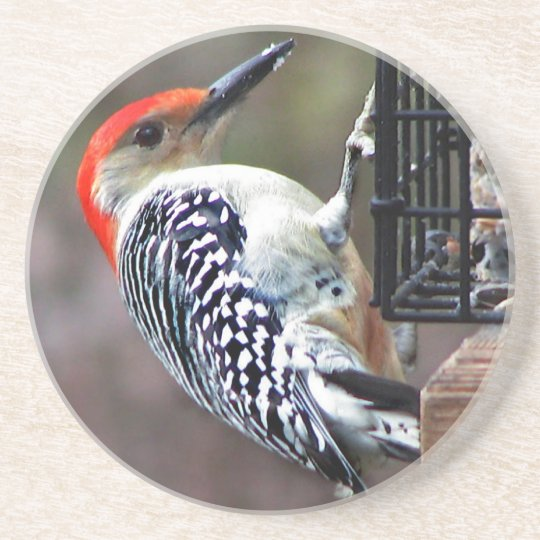 Red-bellied Woodpecker Coaster