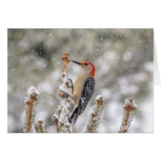 Red-bellied Woodpecker in the snow Card