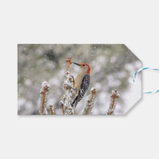 Red-bellied Woodpecker in the snow Gift Tags