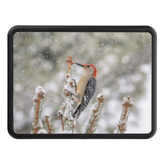 Red-bellied Woodpecker in the snow Hitch Cover