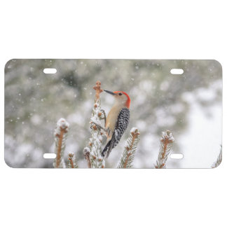Red-bellied Woodpecker in the snow License Plate