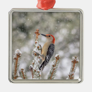Red-bellied Woodpecker in the snow Metal Ornament