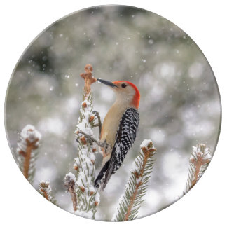 Red-bellied Woodpecker in the snow Plate