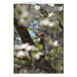 Red-bellied Woodpecker Note Card