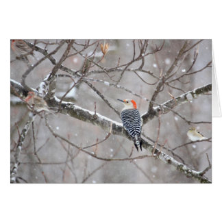 Red Bellied Woodpecker Notecard - Blank Inside