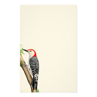 Red Bellied Woodpecker on a Branch Stationery