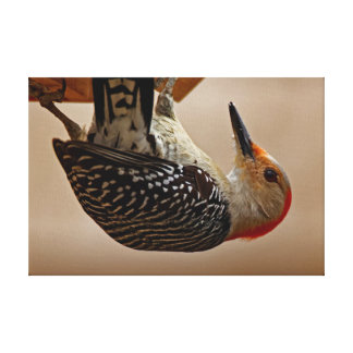 Red-bellied Woodpecker on a Suet Feeder Canvas Print