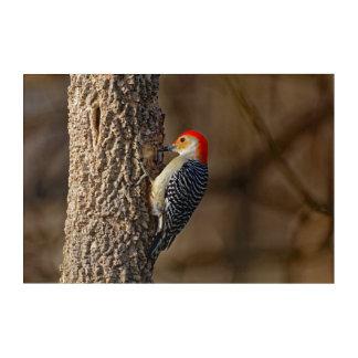Red-bellied Woodpecker on a Tree Acrylic Wall Art