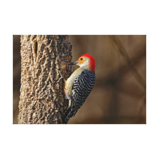Red-bellied Woodpecker on a Tree Canvas Print