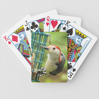 Red-bellied woodpecker playing cards