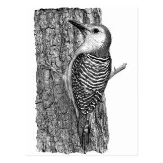 Red-bellied Woodpecker Postcard