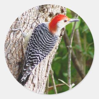 Red Bellied Woodpecker Sticker 2