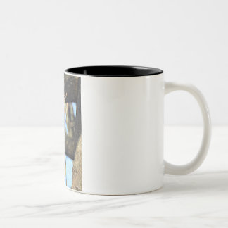 Red-bellied Woodpecker with his Peanut Two-Tone Coffee Mug