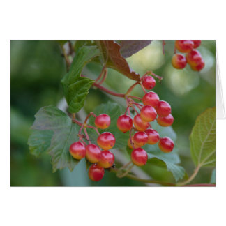 Red Berries Card