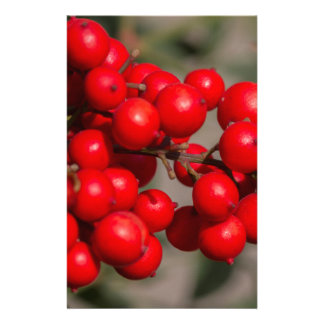 red berries in the garden stationery paper