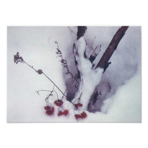 Red Berries on Snow Poster