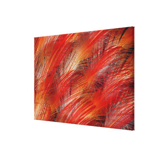 Red Bird Of Paradise Feather Abstract Canvas Print