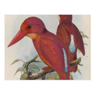 Red Birds Postcard
