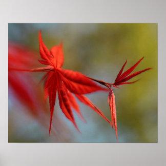 """Red Bloom"", Maple leaf Poster"