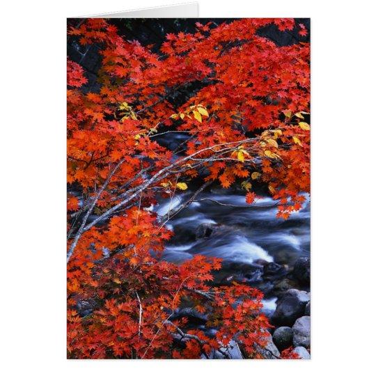 Red/Blue Landscape Card