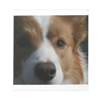 red border-collie notepad